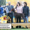 GOLD DUSTER DOBS WONKA DE RESDOBES
