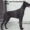CITTO V. FURSTENFELD