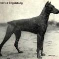 TROLL V. D. ENGELSBURG