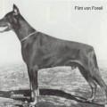 FLINT V. FORELL