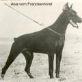 ALVA V. FRANCKENHORST