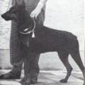 JAGO V. FURSTENFELD