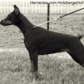HERRACLEA V. HOLZBERGERHOF