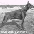 BRYAN V. D. WOLFSHOHE