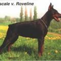 PASCALE V. ROVELINE