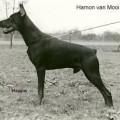 HAMON V. MOOI OAVELT