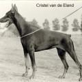 CRISTEL V. D. ELAND