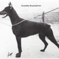 ANUSCHKA BRYANSDOTTER