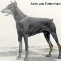 ANDY V. EICHENHAIN