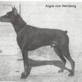 ARGUS V. NEROBERG