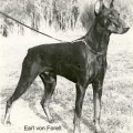 EARL V. FORELL