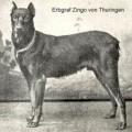 ERBGRAF ZINGO V. THURINGEN
