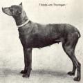 THINDA V. THURINGEN
