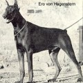 ERO V. HAGENSTERN