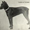 CORDULA V. THURINGEN