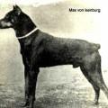 MAX V. KAISERRING