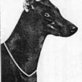 TATJANA V. JAGERHOF