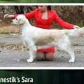 ANESTIK'S SARA