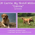 CARRIE MY GOLD WILLOW