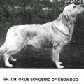 OKUS SONGBIRD OF CROWOOD