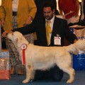 SERENDIPITY DOG CHARLOTTE