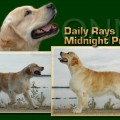 DAILY RAYS MIDNIGHT PRINCE