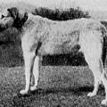 WARGRAVE 1897