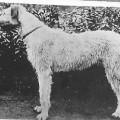 BRIAN II 1893