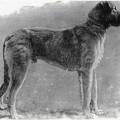 DERMOT ASTORE 1896