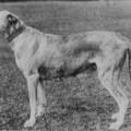 CHEEVRA 170 1892
