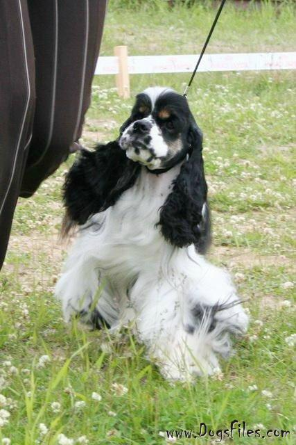 http://www.dogsfiles.com/mkportal/modules/dogsbase/albums/16/23891/foto15801.jpg