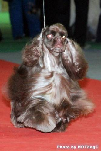 http://www.dogsfiles.com/mkportal/modules/dogsbase/albums/16/23892/foto15777.jpg