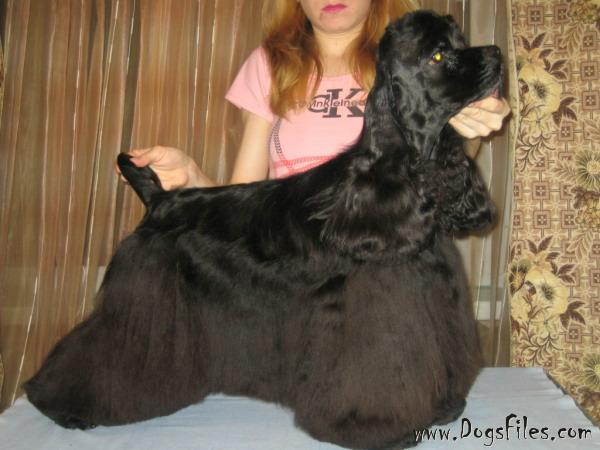 http://www.dogsfiles.com/mkportal/modules/dogsbase/albums/16/23893/foto15792.jpg