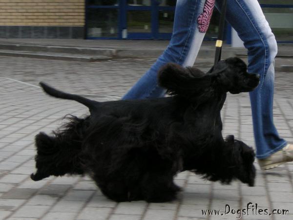 http://www.dogsfiles.com/mkportal/modules/dogsbase/albums/16/23893/foto15793.jpg
