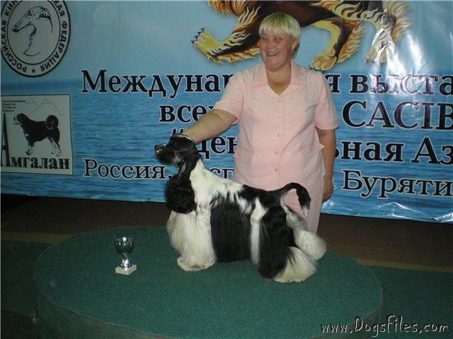 http://www.dogsfiles.com/mkportal/modules/dogsbase/albums/16/23894/foto15815.jpg