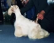 http://www.dogsfiles.com/mkportal/modules/dogsbase/albums/16/23939/foto15825.jpg
