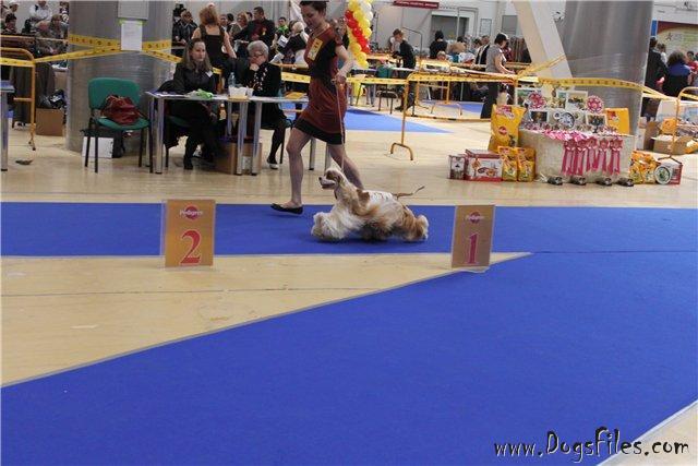 http://www.dogsfiles.com/mkportal/modules/dogsbase/albums/16/24501/foto15763.jpg