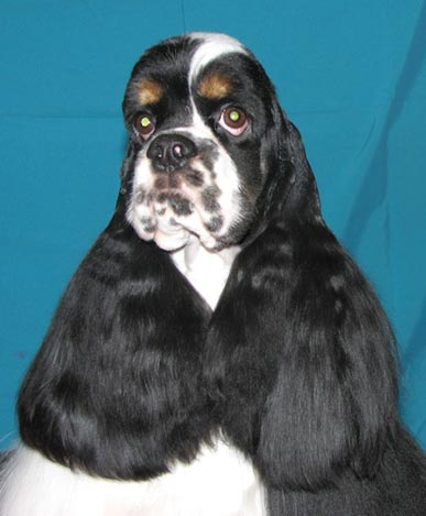 http://www.dogsfiles.com/mkportal/modules/dogsbase/albums/16/24531/foto15756.jpg