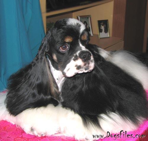 http://www.dogsfiles.com/mkportal/modules/dogsbase/albums/16/24531/foto15758.jpg