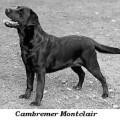 CAMBREMER MONTCLAIR