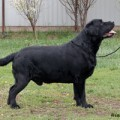 DARK SHADOW LAB OF FRANCOS VALLEY