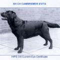 CAMBREMER EVITA