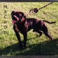 ARIES KENNELS MACHO ROM