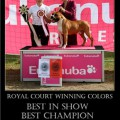 ROYAL COURT WINNING COLORS