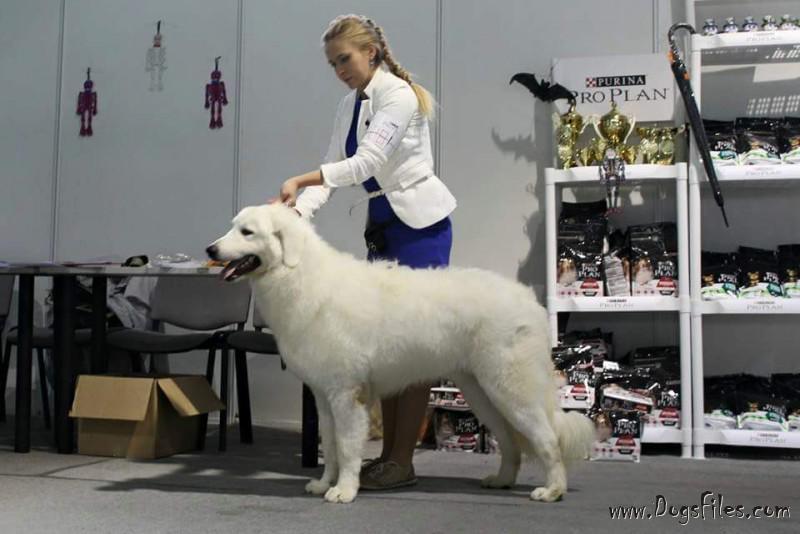 вышивка условия оплаты за вязку собак новость заключается том