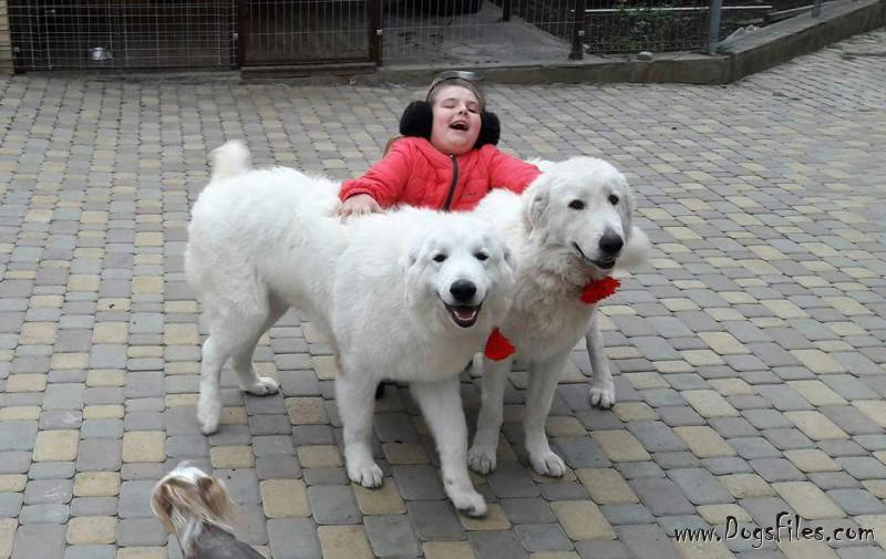 будет пытаться условия оплаты за вязку собак форма договора оптовой