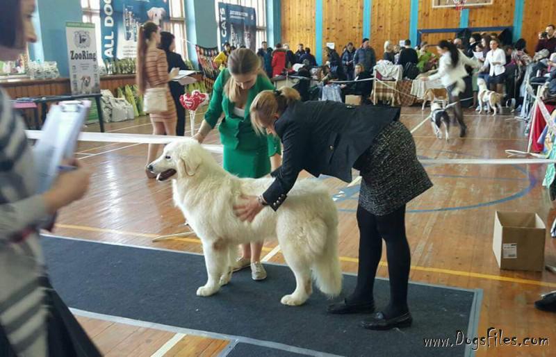 условия оплаты за вязку собак душевая