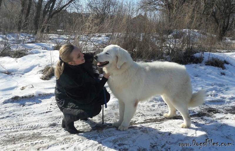 условия оплаты за вязку собак социумом
