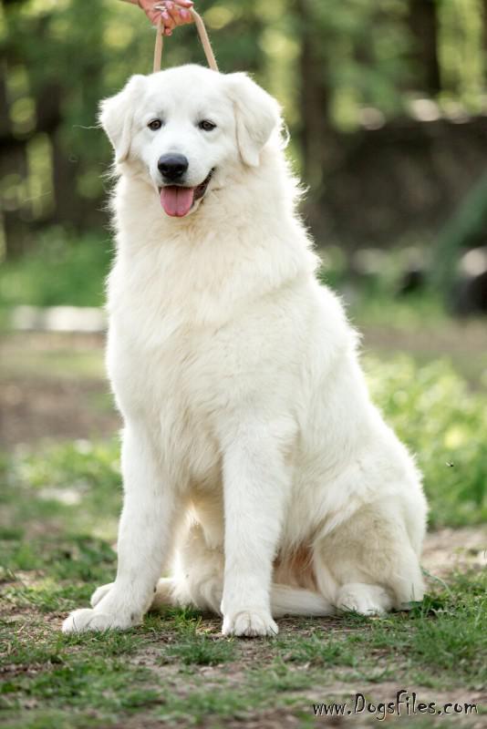 условия оплаты за вязку собак всего останавливать свой