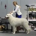 НАТАЛЬЯ условия оплаты за вязку собак курсором называют